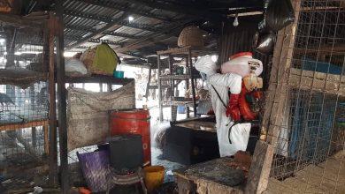 Photo of Decontamination of the Ketu Live Bird Market