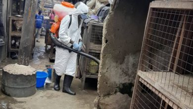 Photo of Decontamination of Live Bird Market continues in Tejuosho, Pelewura, Oyingbo and Jankara Live Bird Markets in Lagos State